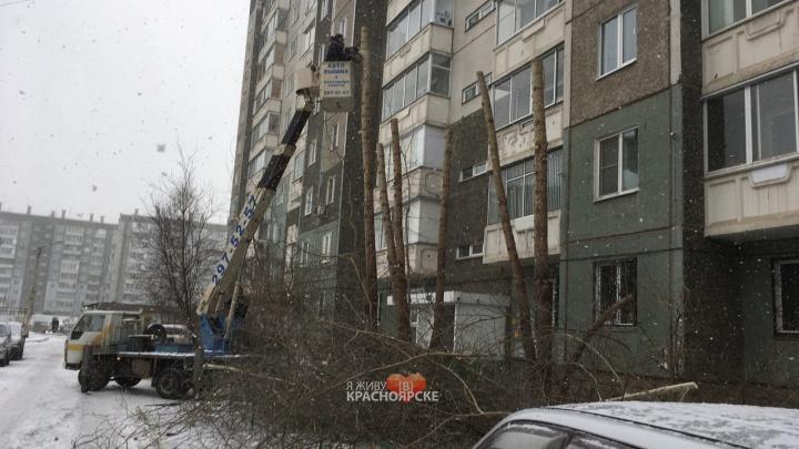 «Опять пеньки»: обрезка деревьев на Водопьянова закончилась разочарованием