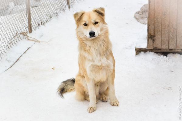 Для календаря позировали 12 собак из приюта Академгородка
