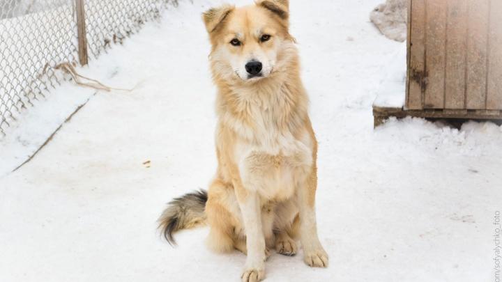 Бродяжки стали моделями: в Новосибирске приют выпустил новогодний календарь с милыми собаками
