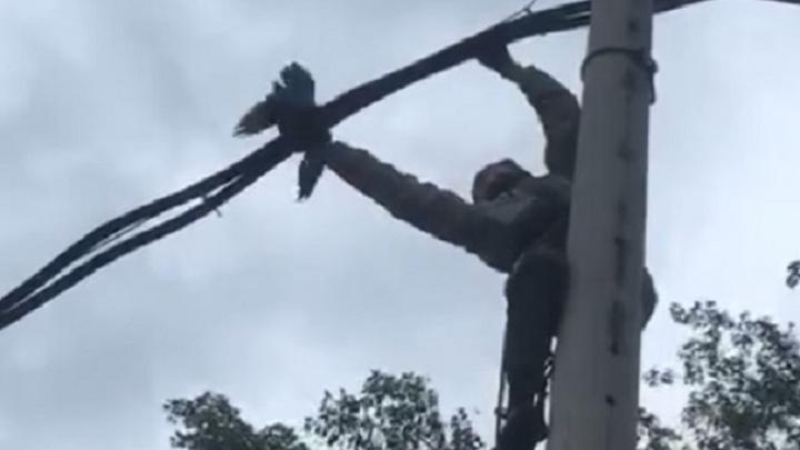 Птичий день: екатеринбуржец спас голубя, который запутался в проводах, и птенца вороны