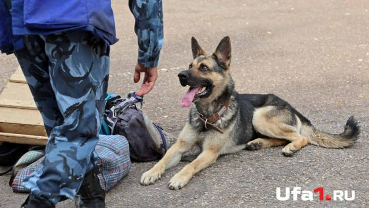 В Башкирии собака нашла украденные 400 кг пшеницы