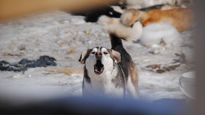 «Три собаки уже съедены»: жители дома на Воинской заявили в полицию об убийстве животных ради еды