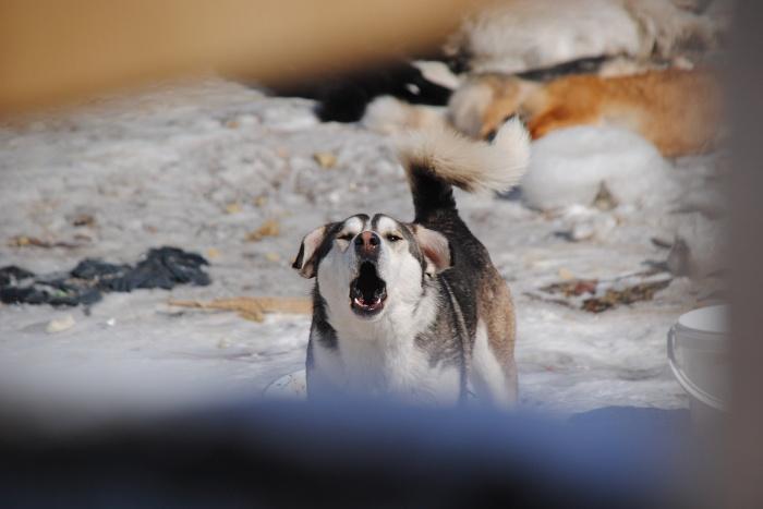 По факту убийства собаки проходит доследственная проверка