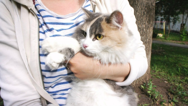 В Уфе девушка хотела помочь котику, но помощь потребовалась ей самой — видео спасательной операции