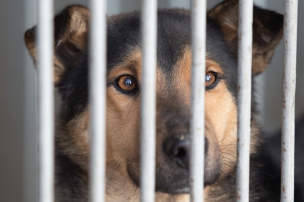 Никто не чешется. Власти Челябинска затянули решение вопроса с отловом бездомных собак