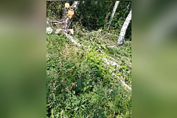 Энергетики срубили лес ради 15-метровой полосы охранной зоны и сделали это законно