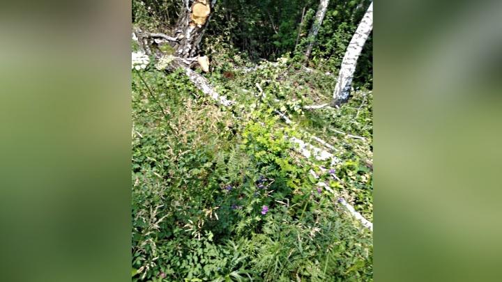 Прокуратура проверила жалобы на рубку леса в Академгородке и возмутилась оставленными бревнами