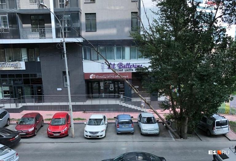 Упавшее дерево на улице Горького зацепилось за провода