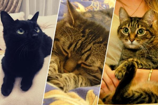 Всем котикам уже за 20 лет