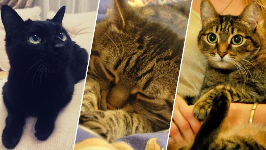 Мем не прав: НГС нашёл трёх новосибирских котов, которые родились до того, как Путин стал президентом