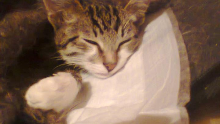 Жительница Уфы, спасшая котенка без двух лап: «Средств хватит на протезы»