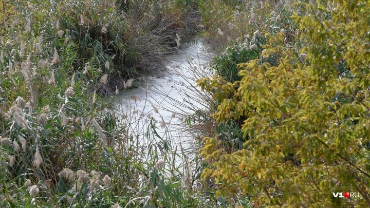 «Вода в реке молочно-белого цвета»: волгоградцы ищут причину загрязнения Царицы