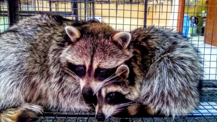 «Алкогольные точки процветают, а зоопарки закрывают»: директор контактного зоопарка— о новом законе