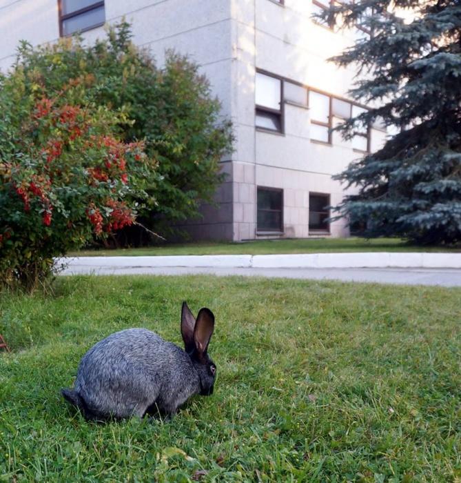 На этом месте кролики периодически попадаются на глаза прохожим