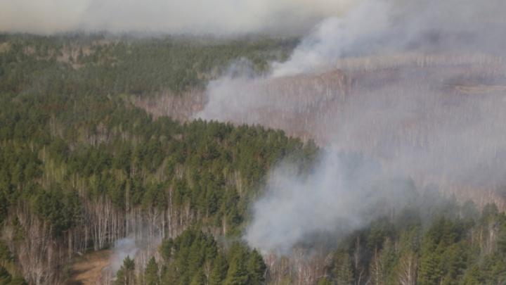 В Курганской области продолжаются лесные пожары. Населенные пункты вне опасности
