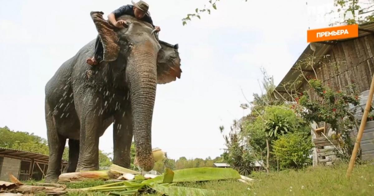 Антон Зайцев искупался со слоном
