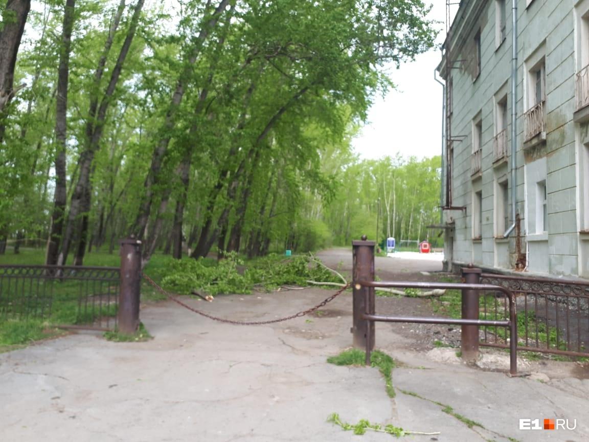 В центре культуры пришли к выводу, что дерево было крепкое, а ветер сильный. Поэтому и произошел несчастный случай