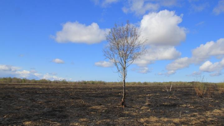 Тактика выжженной земли по-архангельски? Фоторепортаж с полей Кегострова, обезображенных огнем