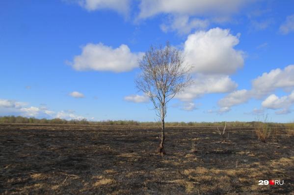 По официальной информации, огонь прошелся по 200 квадратным метрам полей, но наш фотограф считает, что площадь возгорания была больше