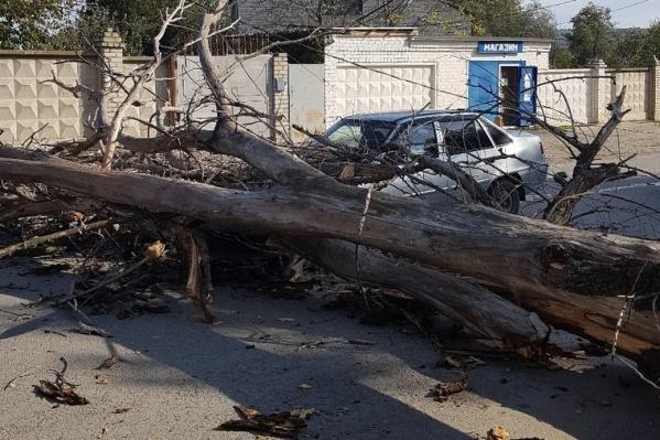 В мэрии заверили, что заниматься упавшими деревьями должны управляющие компании