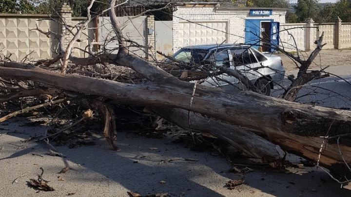 В Волгограде сильный ветер сорвал десятки деревьев и рекламные щиты