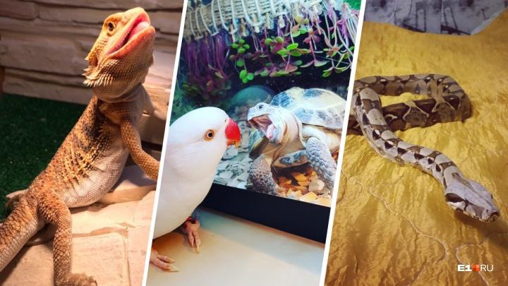 Питоны, скорпионы и самка богомола: смотрим, какая экзотическая «нечисть» живет у екатеринбуржцев