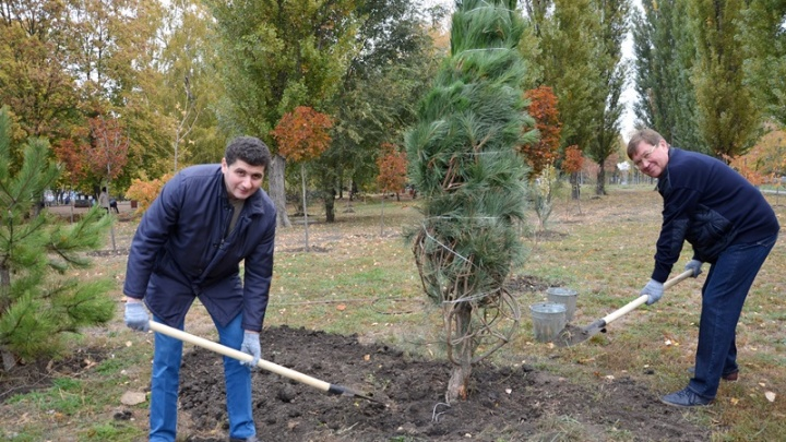Почти 3000 деревьев и 1639 кустарников высадили жители Аксайского района в День древонасаждения