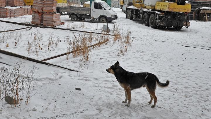 В Боровском собака вцепилась в голову двухлетней девочки. Ребенка отправят спецбортом в Москву