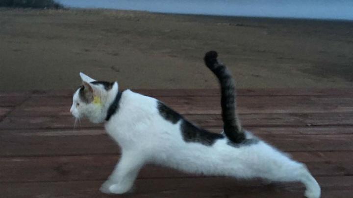 Делаю планку, цепляю кисок: кот из Башкирии завел собственный аккаунт в Instagram