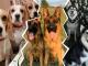 Собачьи семьи в Instagram: они такие милые, что им можно простить даже съеденный диван