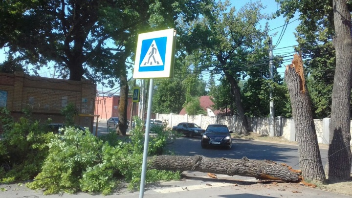 Гнилое дерево рухнуло на пешеходов на переходе возле санатория «Самарский»
