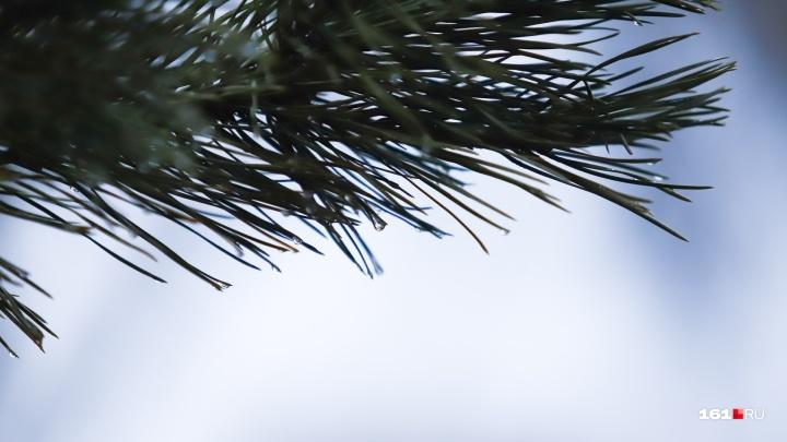 Не новогоднее настроение: какой погоды ждать ростовчанам в первые дни 2020 года