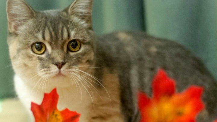 Бизнес в декрете: «Благодаря котикам у меня появился кредит»