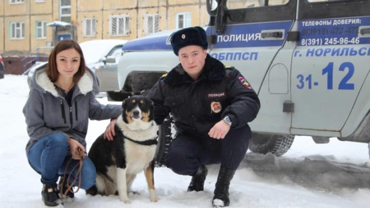 Видео: в Норильске ради тонущего бездомного пса провели спецоперацию