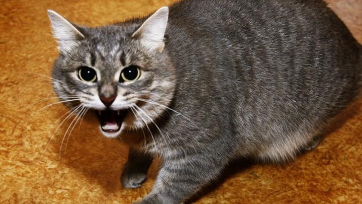 В прошлом году от укусов животных пострадало почти 3 тысячи жителей Курганской области