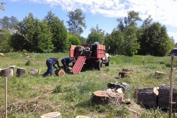 Все проекты ТОСов были реализованы прошедшим летом — например на Кегострове были убраны старые тополя