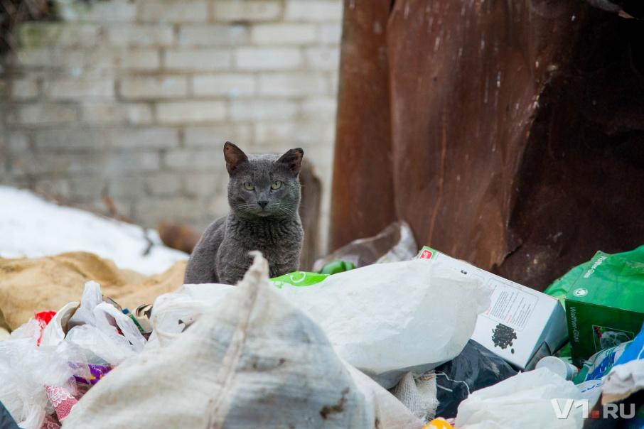 В Волгоградской области определились с мусорной концессией