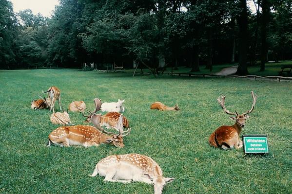 На Дону разрешено охотиться на оленей и косуль