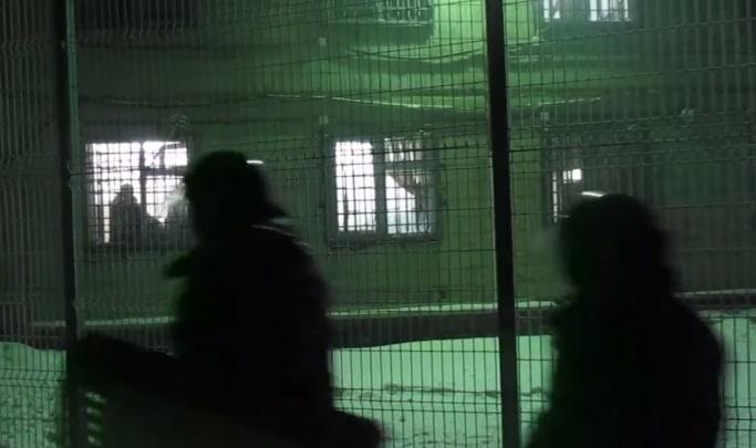 Суд вынес приговор участникам беспорядков в центре содержания мигрантов