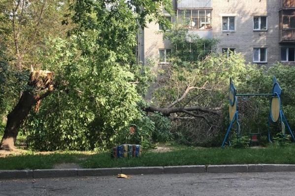 Дерево упало рано утром, когда на площадке не было детей