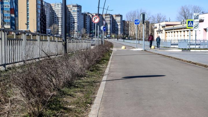 Благоустройство по-нижегородски. Волжская набережная: деревья и кусты умерли, трава не вырастет
