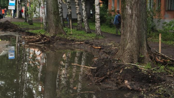 «Деревья упадут и кого-нибудь придавят»: в Ярославле рабочие сняли грунт вместе с корнями лип