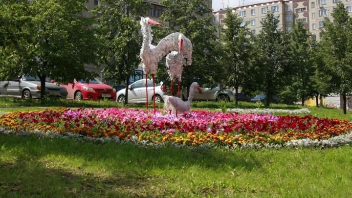 Полмиллиона фиалок и бархатцев: в центре Челябинска сделают больше клумб и вазонов