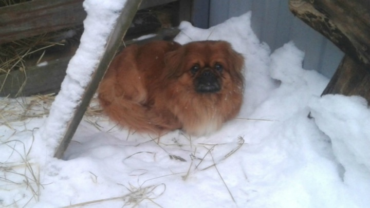 «Пёс от радости чуть куртку мне не разорвал!»: три пропавшие в Новый год собаки нашли своих хозяев