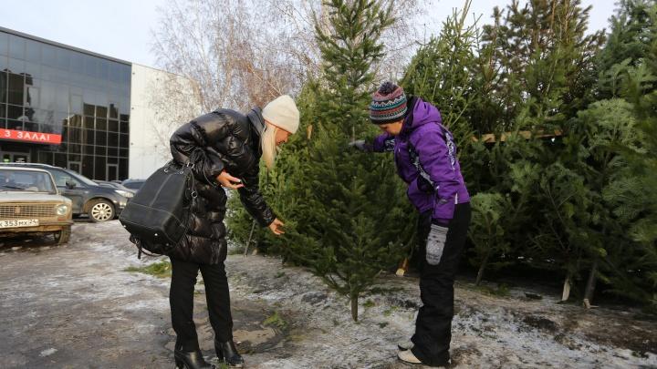 Как выбрать новогоднюю ель, чтобы она радовала все праздники: советы специалистов