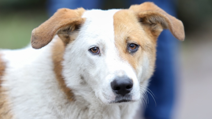 В Новочеркасске мужчина устроил ДТП, спасая собаку
