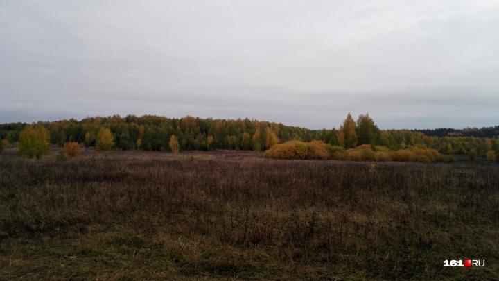 В Шолоховском районе пенсионерка отправилась в лес и заблудилась