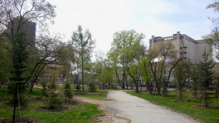 За оперным театром появились свежие кусты и деревья вместо старых и больных