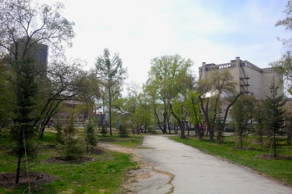 Около десятка елей высадили с двух сторон от дорожки через сквер со стороны пересечения улиц Каменская и Орджоникидзе
