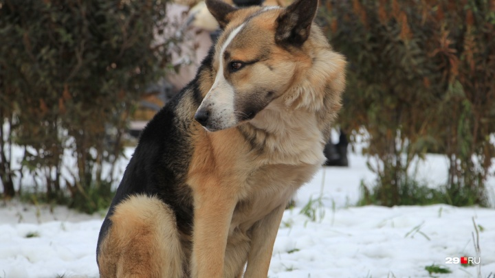 Живодеры из Каргополья просили смягчить наказание за смерть пса, но суд с этим не согласился